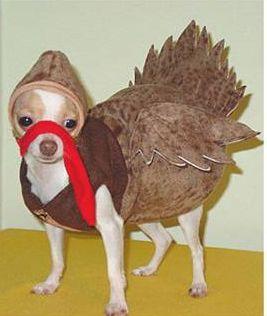 turkeydog.jpg
